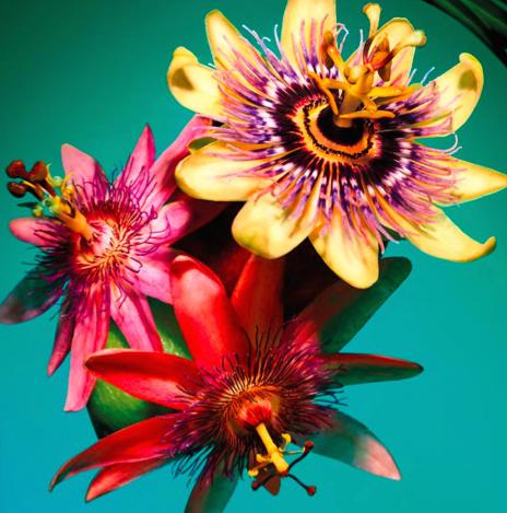 flor omnia